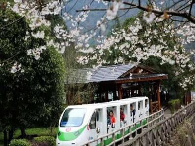 张家界踏春旅游赏花时间表