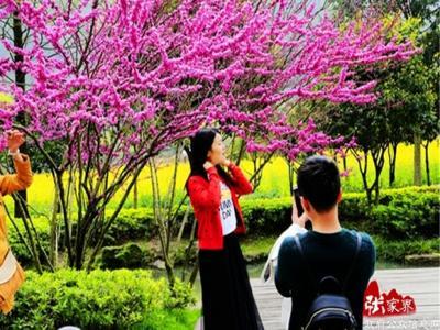 张家界黄龙洞生态广场一个诠释春天的童话世界