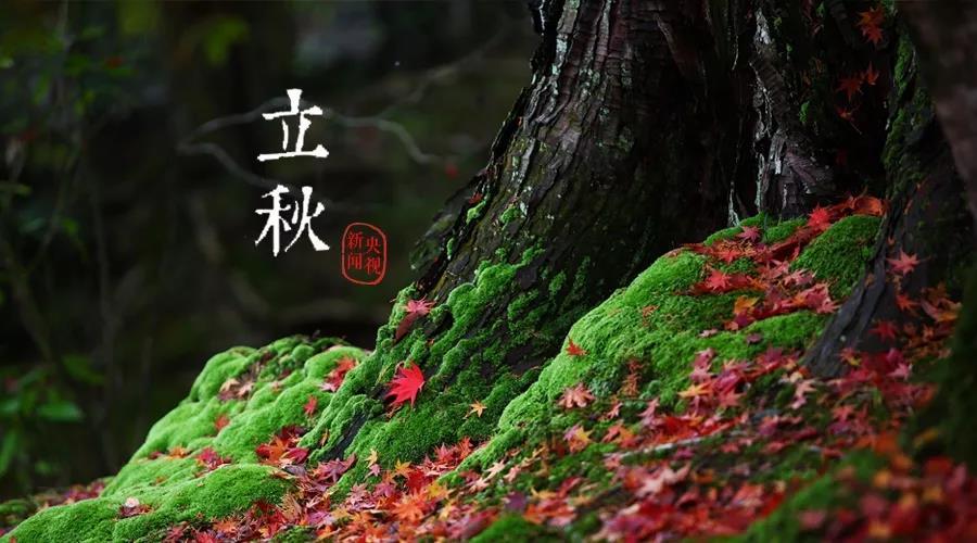 立秋:云天收夏色 木叶动秋声