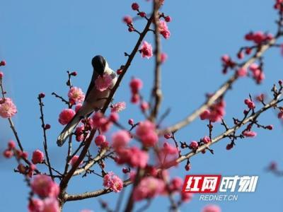 张家界黄龙洞 鸟语花香喜闹春